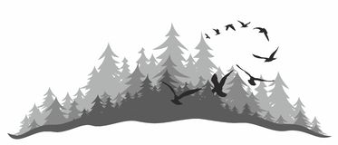 Coniferous forest with birds. Royalty Free Stock Images