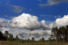 Coniferous forest and blue sky with clouds Stock Image