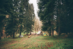 Coniferous Forest with camping Landscape Royalty Free Stock Photo