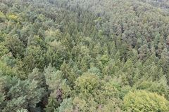 Coniferous Forest. From the top. Europe, Czech Republic, north Bohemia region royalty free stock images