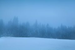 Coniferous forest in dense winter fog Royalty Free Stock Image
