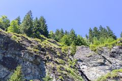 Firs on top of a cliff stock image