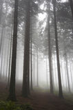 Coniferous forest in fog Stock Photo