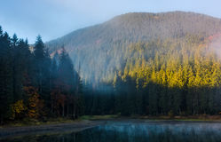Coniferous forest in fog around the mountain lake. Lovely autumn scenery in early morning Royalty Free Stock Photo