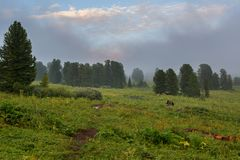 Coniferous forest in the fog on the slope of mountains. Altai Krai. Coniferous forest in the fog on the slope of the mountains. Altai Krai Royalty Free Stock Photo