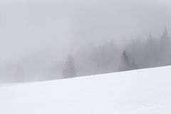 Coniferous forest in fog and snow Stock Images