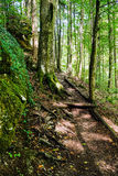 Coniferous forest with footpath Stock Photo