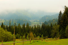 Coniferous forest is green ,the trees tall and mountains Royalty Free Stock Images
