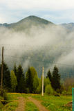 Coniferous forest is green ,the trees tall and mountains Stock Photos