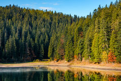 Coniferous forest with hazy lake in mountains Stock Photography