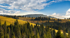 Coniferous forest on the hills of the Carpathian Mountains on a sunny day. Autumn landscape. Coniferous forest on the hills of the Carpathian Mountains on a Royalty Free Stock Photo