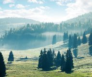 Coniferous forest on hills and meadows. Foggy afternoon in mountains. bright nature scenery with cloudy sky royalty free stock photo