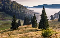 Coniferous forest on a hillside in foggy mountains at sunrise. Hillside with coniferous forest among the fog on a meadow in mountains of Romania in morning light Royalty Free Stock Image
