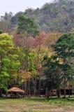 Coniferous Forest khao-samlan. At sarabiri Thailand Stock Photos