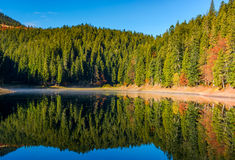 Coniferous forest with lake in mountains Royalty Free Stock Photos
