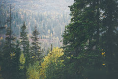 Coniferous Forest Landscape in scandinavian mountains. Travel serene scenic view moody weather Royalty Free Stock Photo