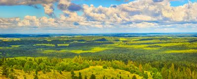 Coniferous forest and meadows. Panorama Royalty Free Stock Image