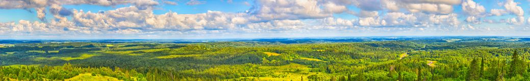 Coniferous forest and meadows. Panorama. Beautiful view of the coniferous forest and meadows. Panorama Royalty Free Stock Photos