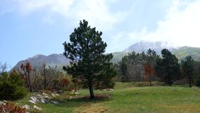Coniferous forest in Montenegro. Texture tree. Forest in the sum stock video footage