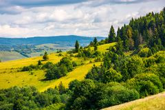 Coniferous forest on a  mountain slope. Lovely autumn countryside Royalty Free Stock Image