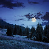 Coniferous forest on a  mountain slope in moon light Stock Photography