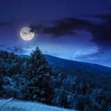 Coniferous forest on a  mountain slope at night Stock Images