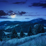 Coniferous forest on a  mountain slope at night Stock Image