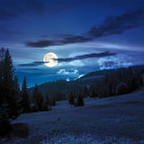Coniferous forest on a  mountain slope at night Royalty Free Stock Photo