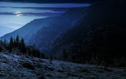 Coniferous forest on a mountain slope at night. Coniferous forest on a steep mountain slope at night in full moon light stock image