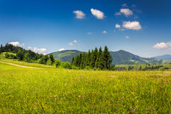 Coniferous forest on a  mountain slope Royalty Free Stock Images