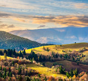 Coniferous forest on a  mountain slope at sunrise Royalty Free Stock Image