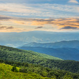 Coniferous forest on a  mountain slope at sunrise Royalty Free Stock Images