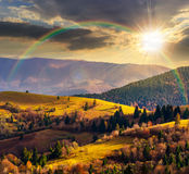 Coniferous forest on a  mountain slope at sunset Stock Images