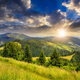 Coniferous forest on a  mountain slope at sunset Royalty Free Stock Images