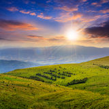 Coniferous forest on a  mountain slope at sunset Royalty Free Stock Photos
