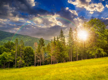 Coniferous forest on a  mountain slope at sunset. Slope of mountain range with coniferous forest in fog with rainbow in evening light Stock Image
