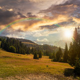Coniferous forest on a  mountain slope at sunset. Slope of mountain range with coniferous forest at sunset with rainbow Royalty Free Stock Photos