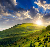 Coniferous forest on a  mountain slope at sunset Stock Image