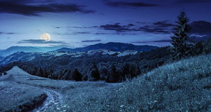Coniferous forest on a  mountain top at night Stock Images