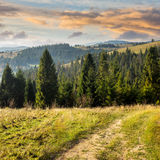 Coniferous forest on a  mountain top at sunrise Stock Photo