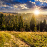 Coniferous forest on a  mountain top at sunset Royalty Free Stock Photo