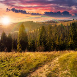 Coniferous forest on a  mountain top at sunset Royalty Free Stock Images