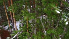 Coniferous forest in the mountains stock footage