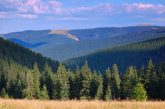 Coniferous forest in the mountains Royalty Free Stock Photography