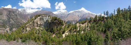Coniferous forest in Nepal. Charming view in the mountains Stock Photography