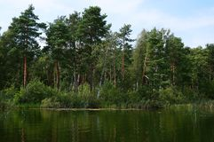 Forest at the Pisochne Lake near Shatsk stock photo