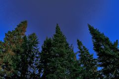 Coniferous forest in the rays of the setting sun Stock Image