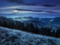 Coniferous forest in romaninan mountain at night stock image