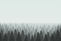 Coniferous forest silhouette template. Vector illustration. Stock Images