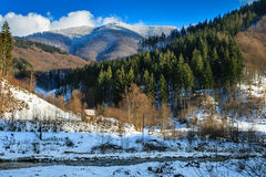 Coniferous forest on the snowy mountain peaks Stock Images